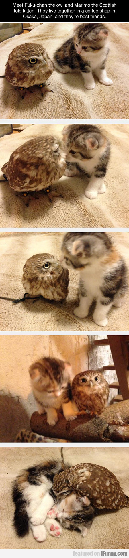 Meet Fuku-chan The Owl And Marimo The Kitten
