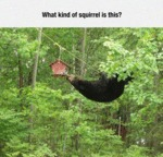 What Kind Of Squirrel Is That?