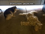 Brush A Husky, Get One Free...