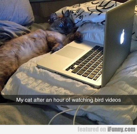 My Cat After An Hour Of Watching Bird Videos