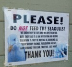 Please Do Not Feed The Seagulls...