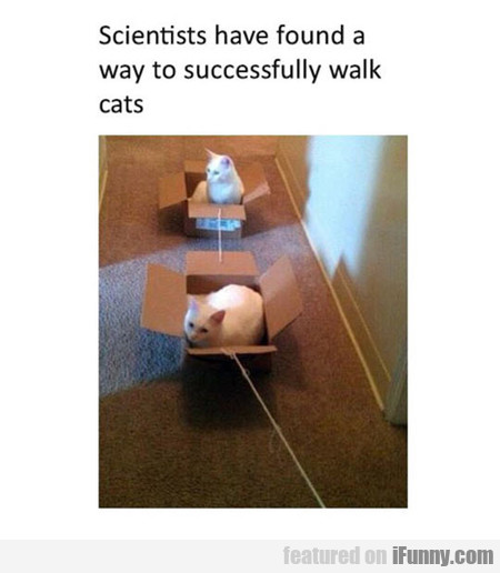 scientists have found a way to walk the cats