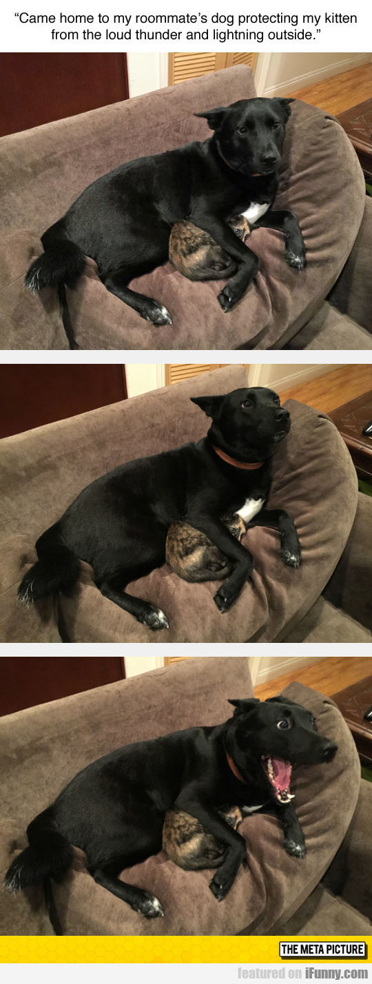 Dog Protecting Cat From Thunder