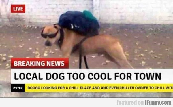 Local Dog Too Cool For Town