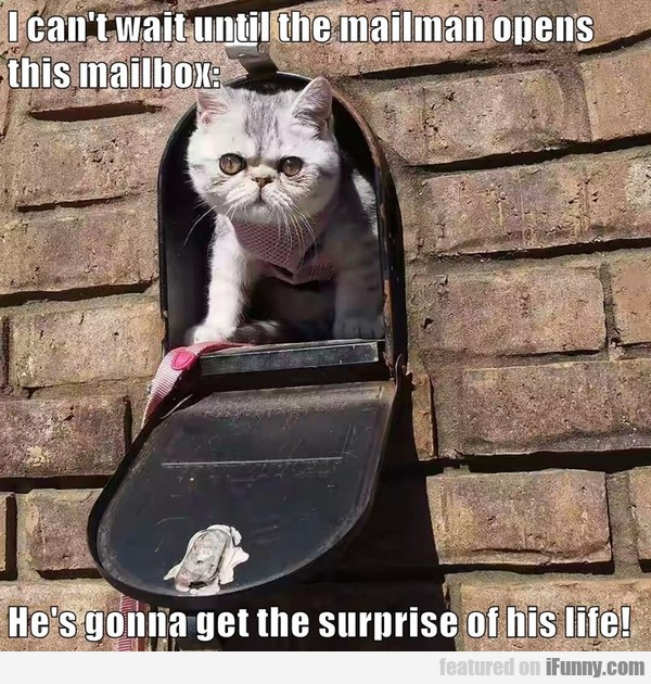 I Can't Wait Until The Mailman Opens This Mailbox