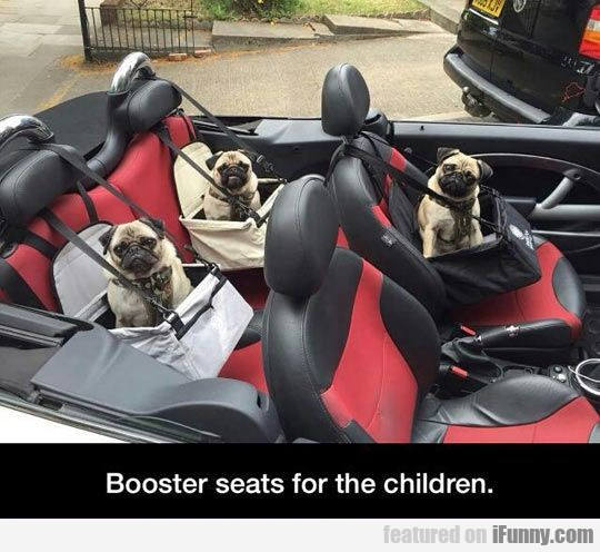 Booster Seats For The Children