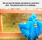 My Son Wore His Batman Rain Jacket To A Local