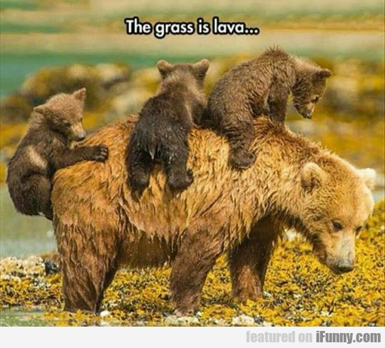 Bear Cubs Playing The Grass Is Lava