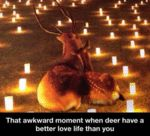 That Awkward Moment When Deer Have