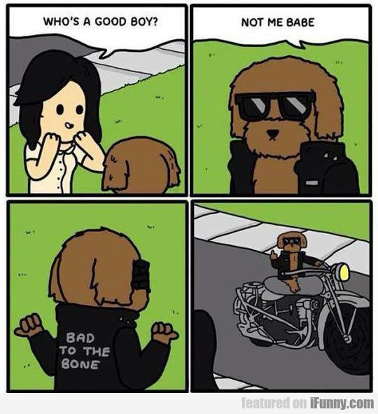 Bad To The Bone Dog