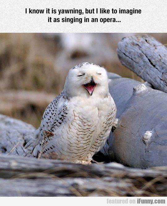 I Know It Is Yawning, But I Like To Imagine