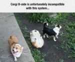 Corgi B-side Is Unfortunately