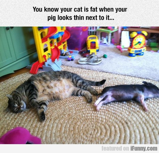 You Know Your Cat Is Fat