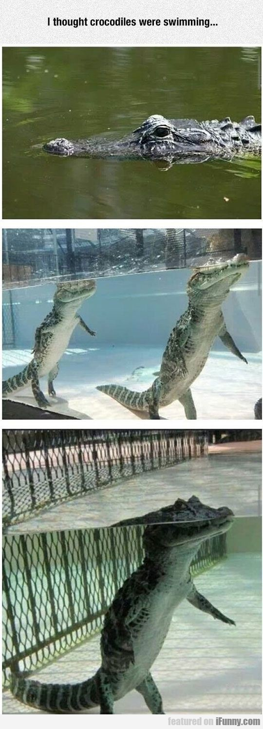 I thought crocodiles