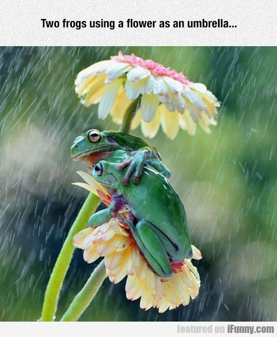 Two Frogs Using A Flower