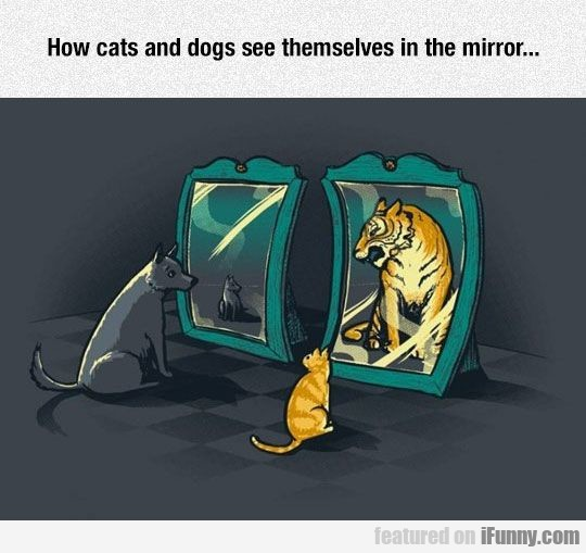 How Cats And Dogs See