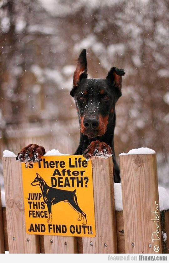 Is There Life After Death? Jump This Fence
