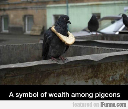 A Symbol Of Wealth Among Pigeons...