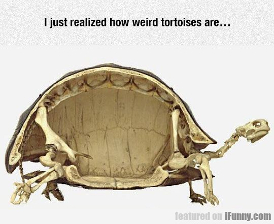 I Just Realized How Weird Tortoises Are