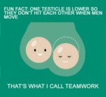 Fun Fact: One Testicle...