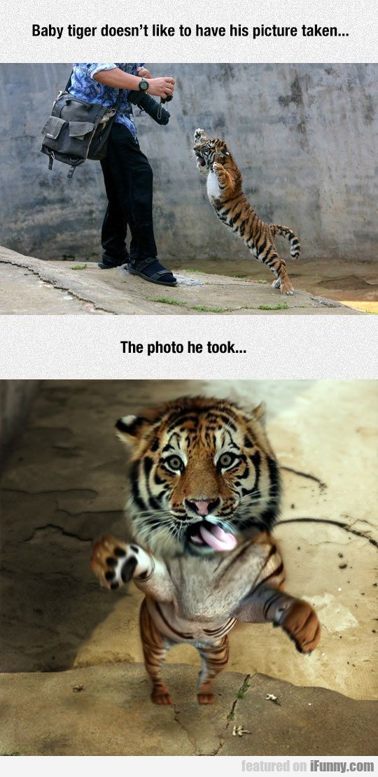 Baby tiger doesn't like to have