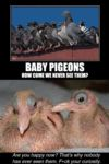 Baby Pigeons, How Come We Never