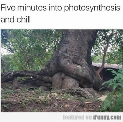 Five Minutes Into Photosynthesis...