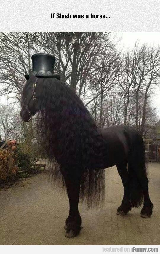 Horse Wants To Be Slash