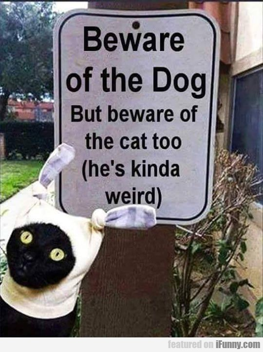 Beware Of The Dog But Beware Of The Cat