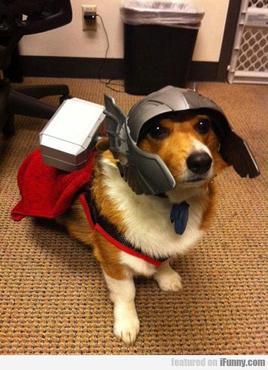 Oh Hi, My Name Is Thorgi
