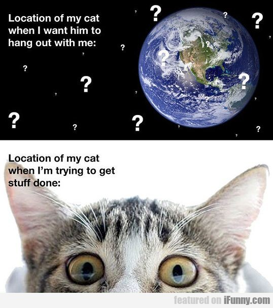 Location Of My Cat When I Want Him To