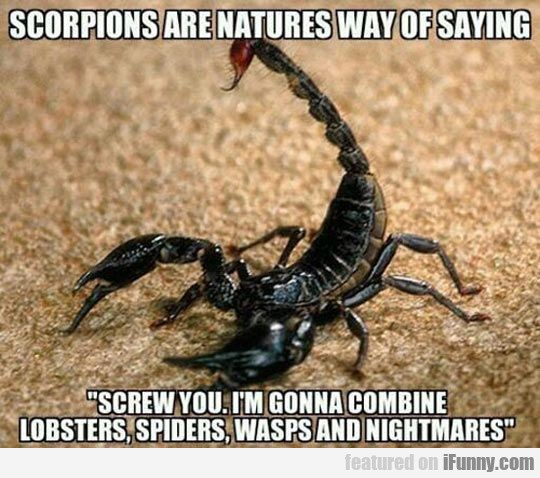 Scorpions Are Natures Way