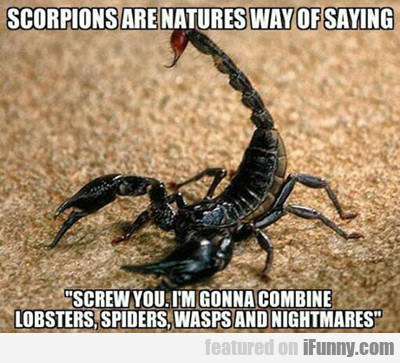 Scorpions Are Nature's Way Of Saying...