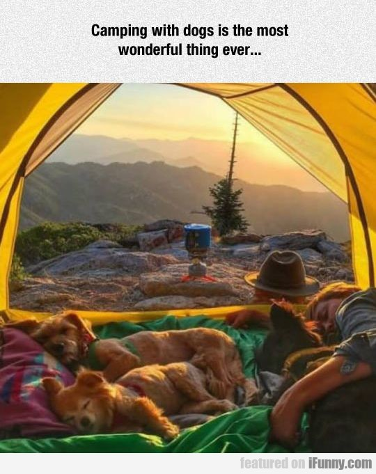 Camping With Dogs Is The Most