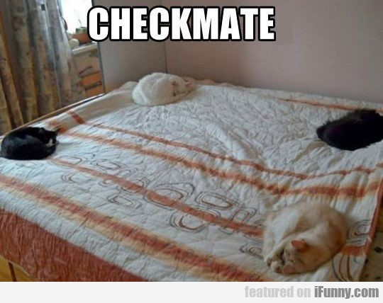 Checkmate, Nowhere To Sleep Now Human