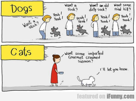 dogs vs. cats... again...