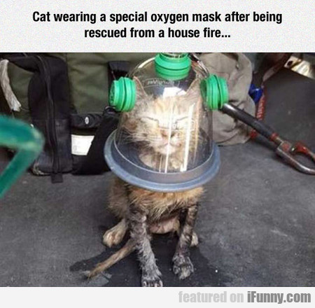 cat wearing a special oxygen mask