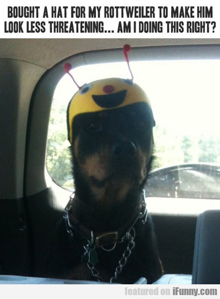 Bought A Hat For My Rottweiler To Make Him Look...