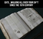 Cats... Walking All Over Your Shit...