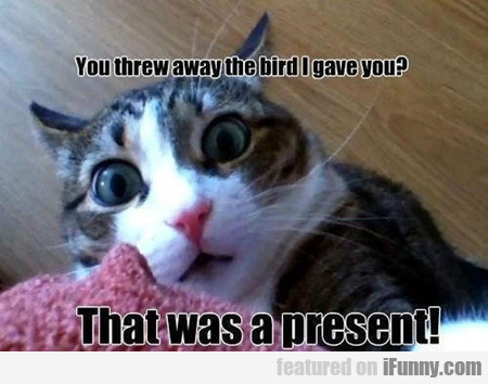 You Threw Away The Bird I Gave You? Why?