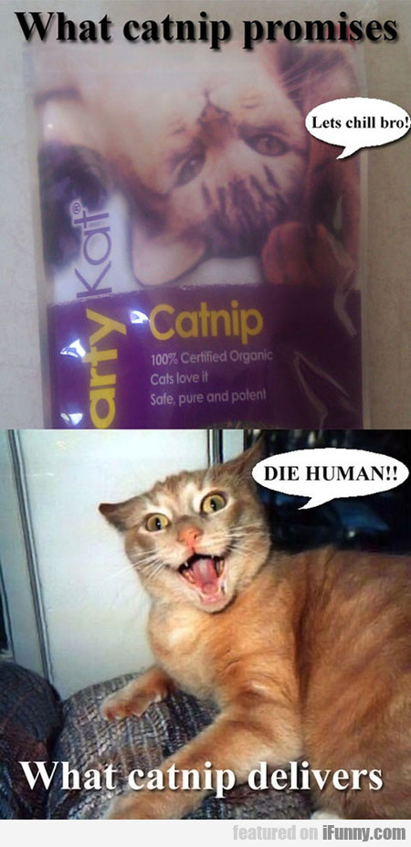 What Catnip Promises