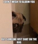I Don't Wish To Alarm You, But...