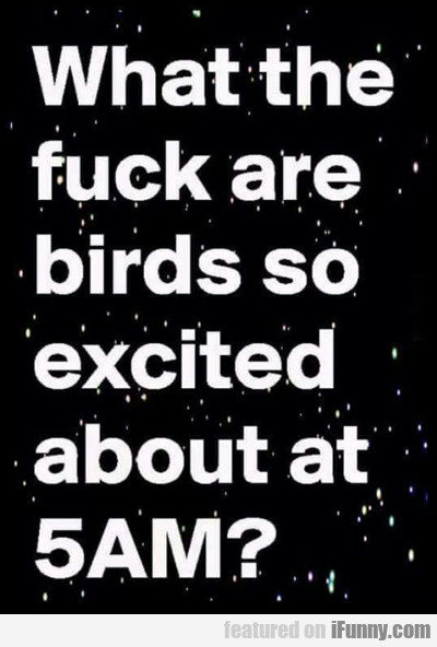 what the fuck are birds so excited about...