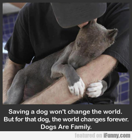 Saving A Dog