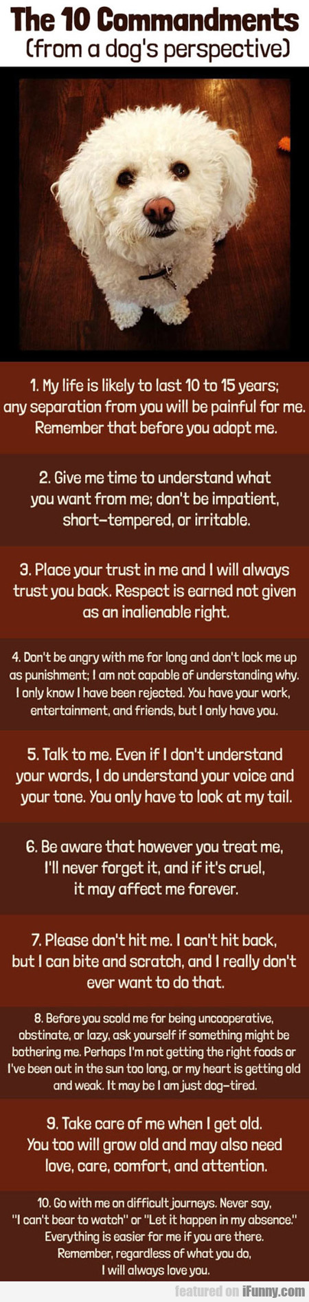 The 10 Commandments From A Dog's Perspective