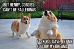 Corgies Can't Be Ballerinas