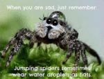 When You Are Sad Just Remember That Spiders...