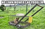 No Lawnmower? No Problem...