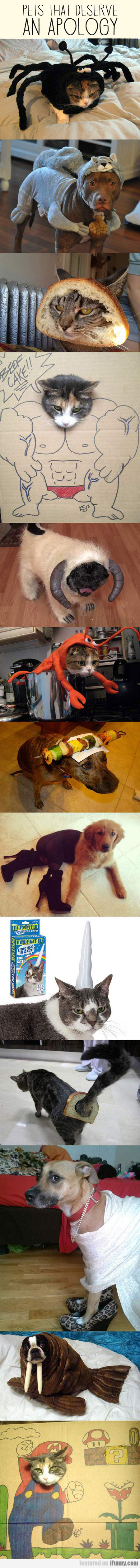 Pets That Deserve An Apology