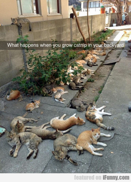 What Happens When You Grow Catnip In Your Backyard